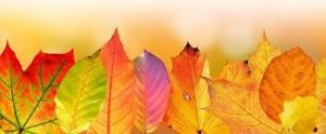 listy podzim
